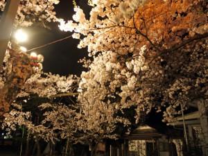 興徳寺の夜桜
