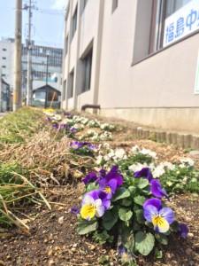 2014春花小路通り花壇1